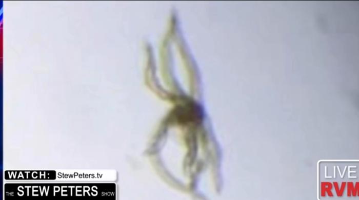 Dette billede har ingen alternativ tekst; filens navn er vaccine-spider.png